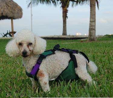 View topic - Free dog diaper sewing pattern • HandicappedPets.Net